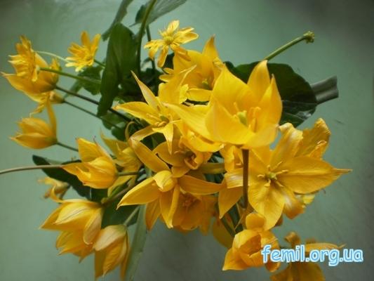 Желтые крокусы вперемешку с еще какими-то цветами (тоже желтыми)