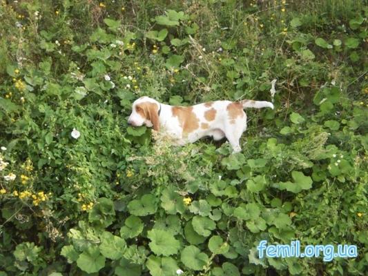 Собака среди зелени