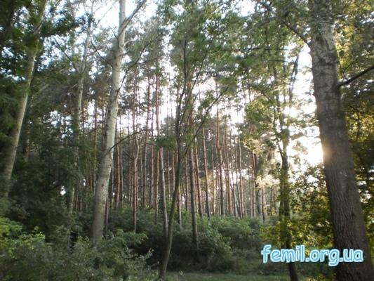 Почти глухой лес вокруг