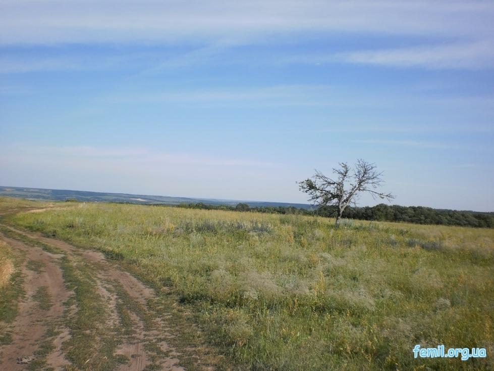 Дорога и дерево в поле