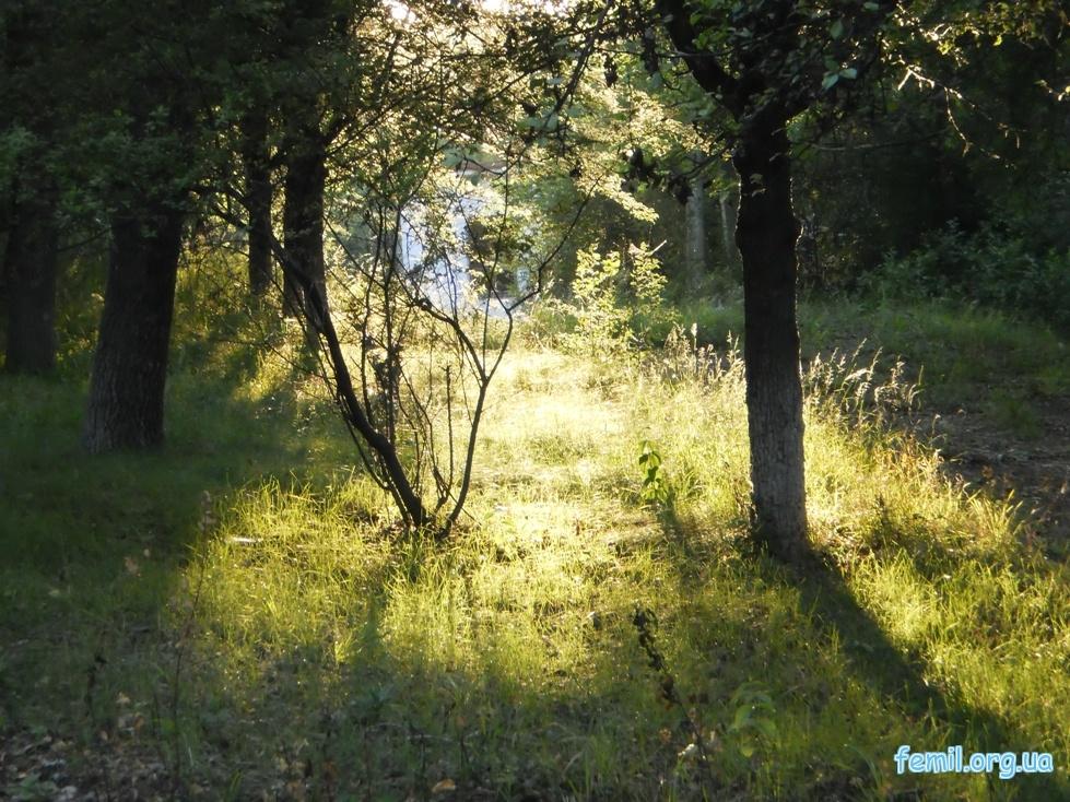 Лес возле Исаковского водохранилища