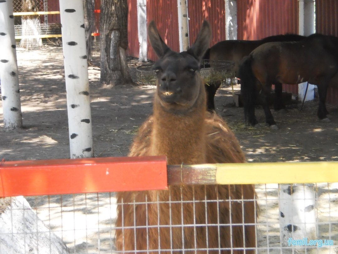 Как построить овчарня план сельхозстройпроект