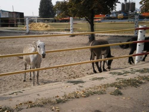 Осел и пони
