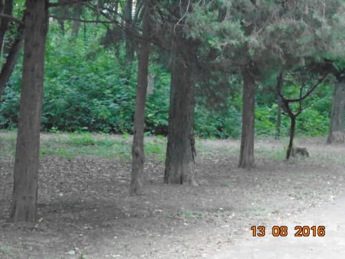 Парк им. газеты Правды, Кривой Рог