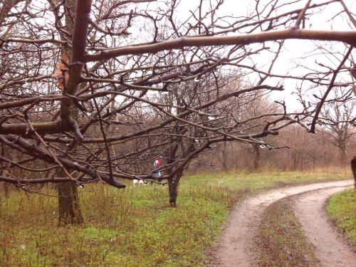 Капли дождя на дереве, фото дня