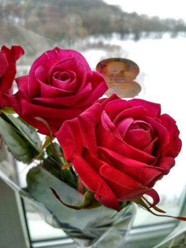 Красные розы на окне