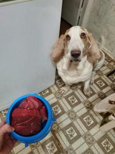 Бассет-хаунд Диксон и миска говядины