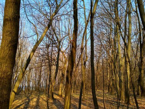 Белка на дереве, Светловодск