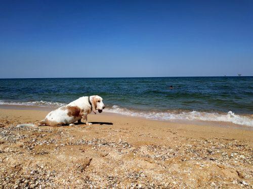 Пляж в селе Стрелково