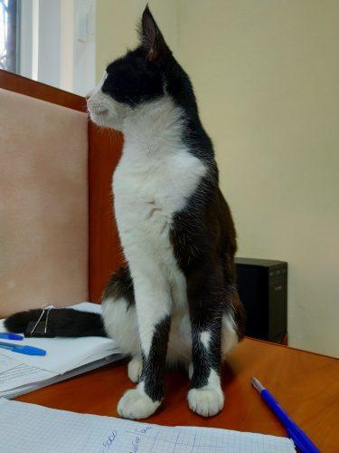 Бездомный кот на моем рабочем столе