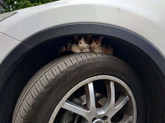 Котята в колесной арке автомобиля